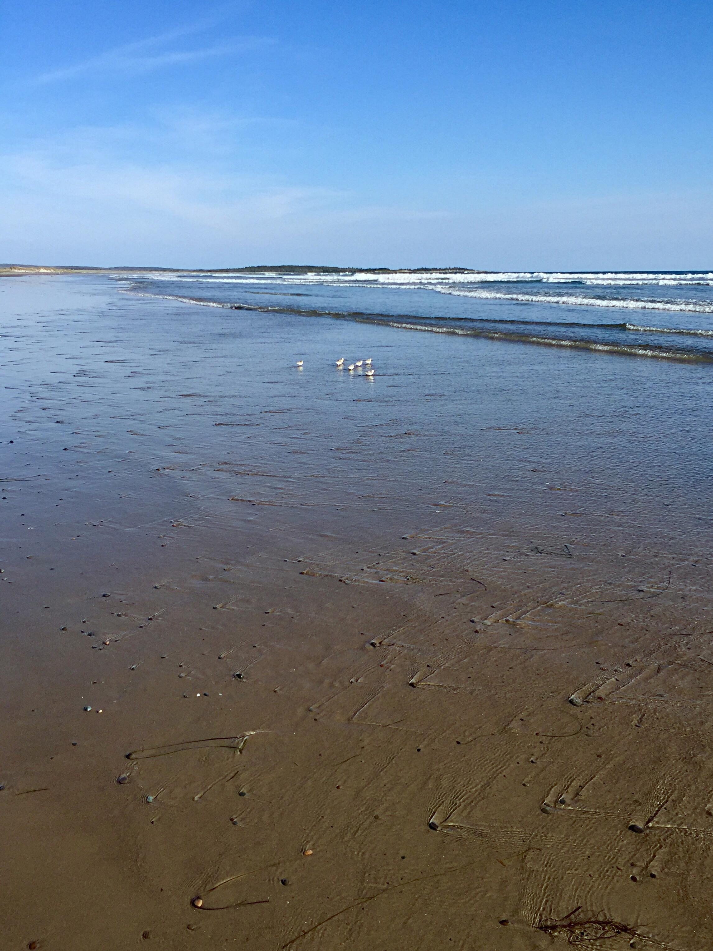 ocean   Rourou